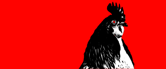 Chicken Head on Red Background - FEATURED