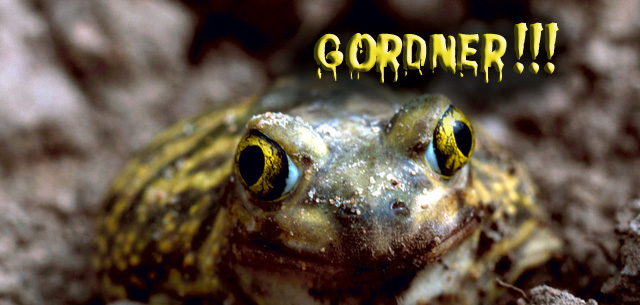 Spadefoot Toad Curses Gordner FEATURED